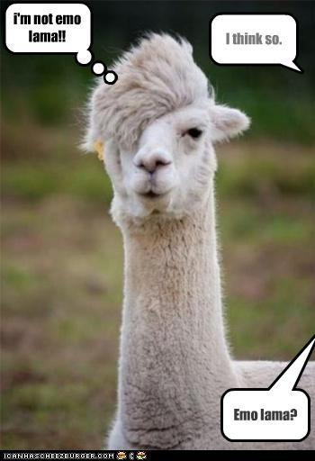 Emo lama? I think so. i'm not emo lama!!