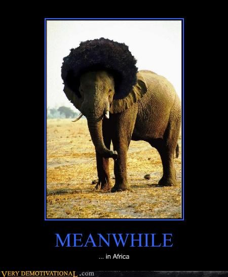 afro elephant hilarious Meanwhile - 4691900928