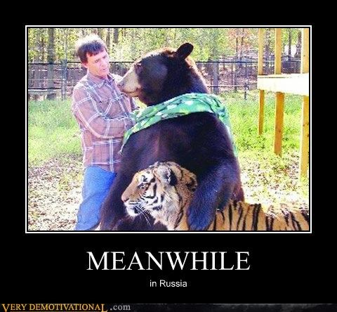 bear Meanwhile Pure Awesome russia tiger