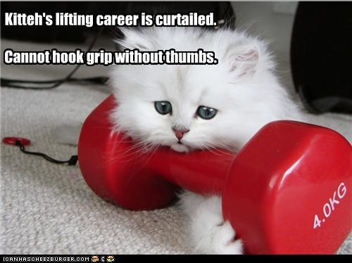 Kitteh's lifting career is curtailed. Cannot hook grip without thumbs.