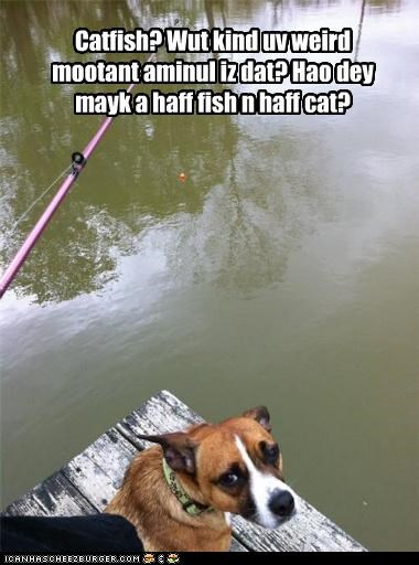 cat,catfish,confused,fish,fishing,half,misinterpretation,misunderstanding,whatbreed