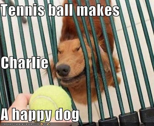 ball,critters,cute,dogs