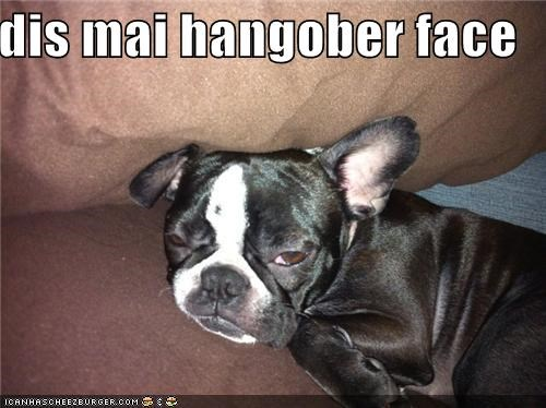 face french bulldogs hangover hungover my this tired - 4692514048