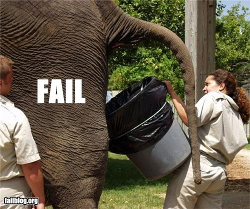 animals bad job elephant g rated poop zoo