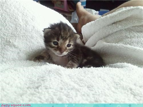 10 days old cat ears eyes kitten open reader squees working - 4692874752