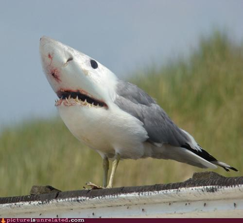 bird photoshop shark - 4693073408