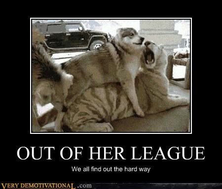 dogs league tiger - 4693225216
