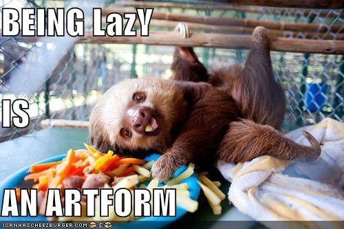 critters,cute,lazy,sloth