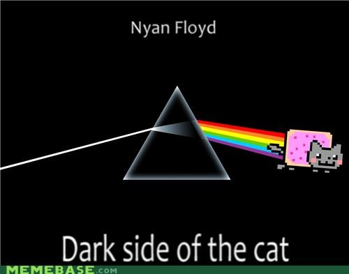 animals,animemes,Dark Side of the Moon,Memes,Nyan Cat,pink floyd
