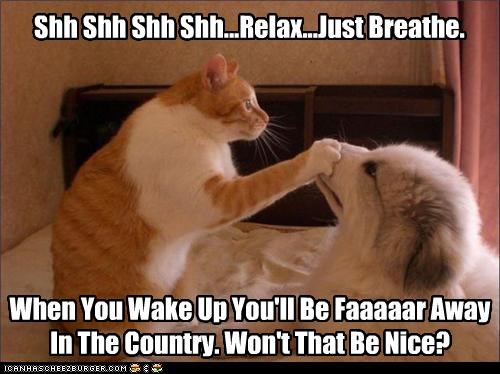 Shh Shh Shh Shh...Relax...Just Breathe. When You Wake Up You'll Be Faaaaar Away In The Country. Won't That Be Nice?