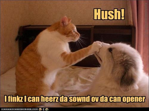 I finkz I can heerz da sownd ov da can opener Hush! KamikazeKatze 04-26-11