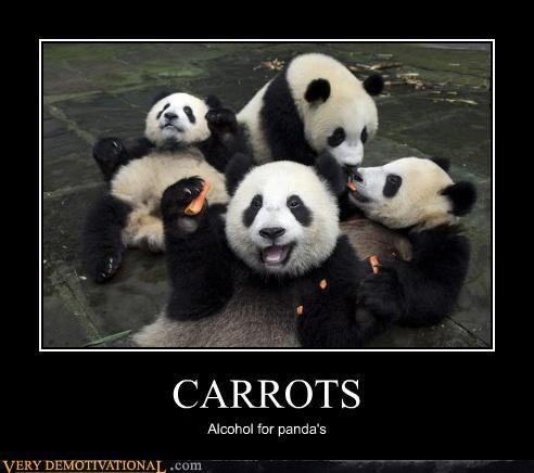 carrots hilarious panda wtf - 4695693312