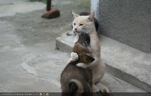 dogs friends goggies hug hugging Interspecies Love shut up - 4695978752