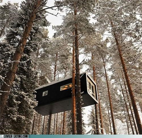 Forest,high,snow,treehouse,trees