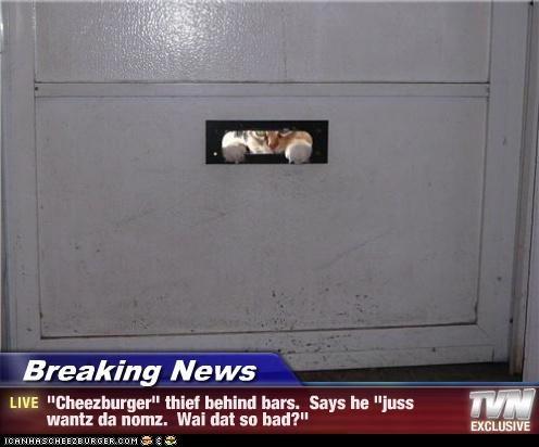 Cheezburger Image 4696311808