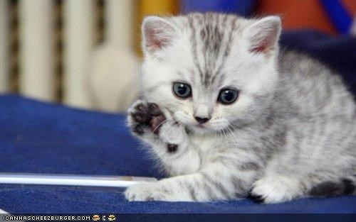cyoot kitteh of teh day,hello,ohai,paws,wave,waving