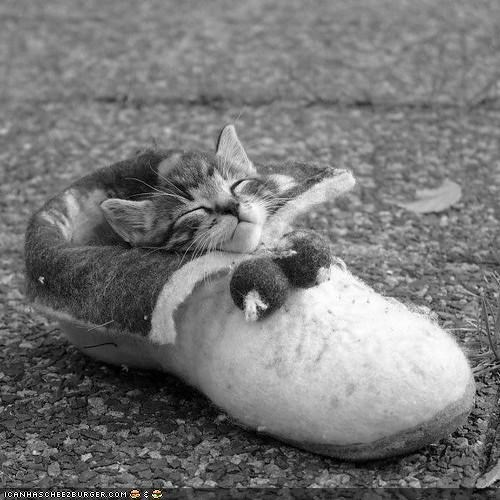 black and white,cyoot kitteh of teh day,shoes,sleeping,slipper