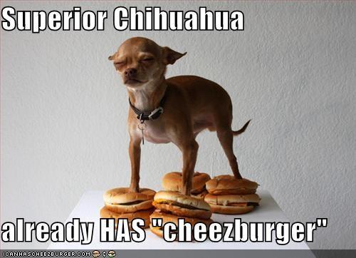Cheezburger Image 4696581376