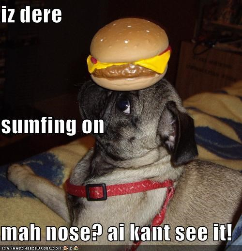 Cheezburger Image 4697140480