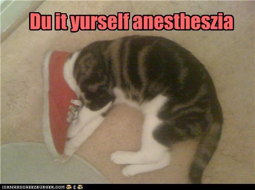 anesthesia caption captioned cat DIY do it yourself shoe stuck - 4697573632