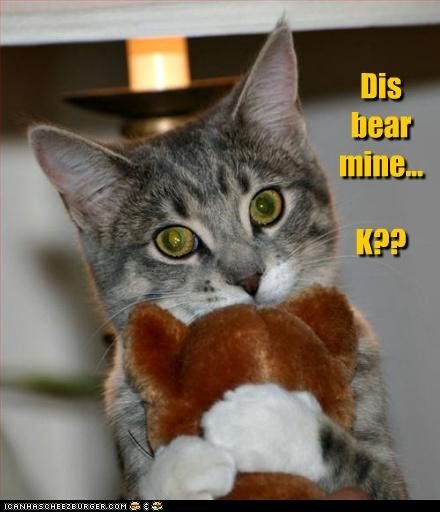 bear caption captioned cat clarifying cuddling holding k mine Okay stuffed animal teddy bear this - 4698194176