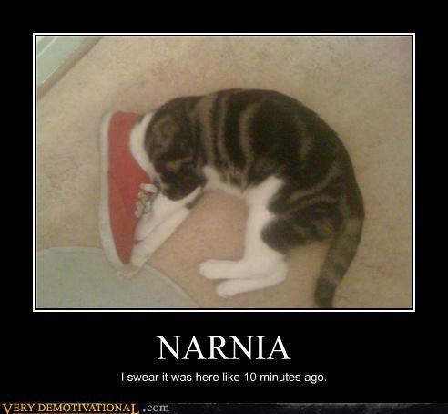 cat,narnia,shoe,wtf