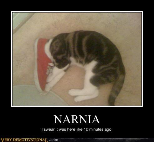 cat narnia shoe wtf - 4698498304