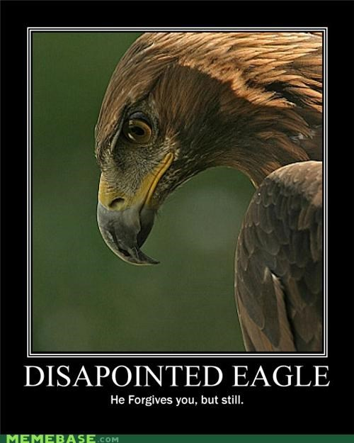 animals,disappointed,eagle,forgive,hilarious