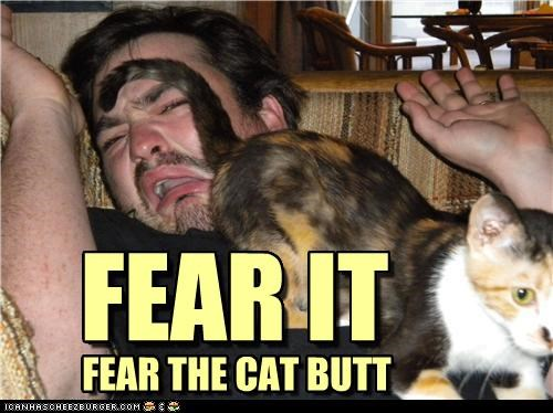 FEAR IT FEAR THE CAT BUTT FEAR IT FEAR THE CAT BUTT