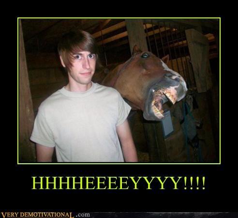 Hey,horse,wtf