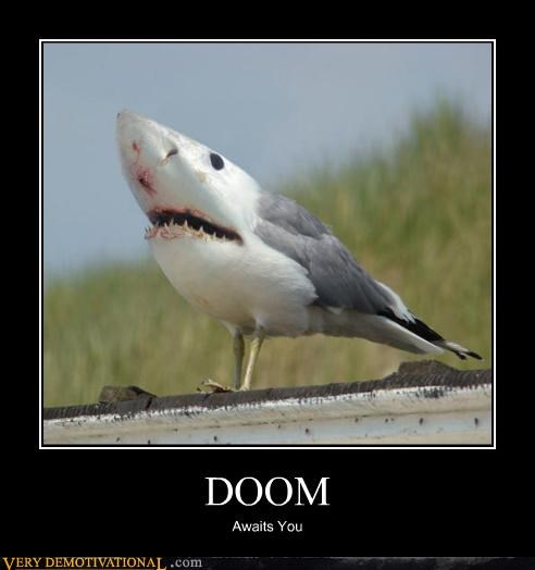 doom,pigeon,shark