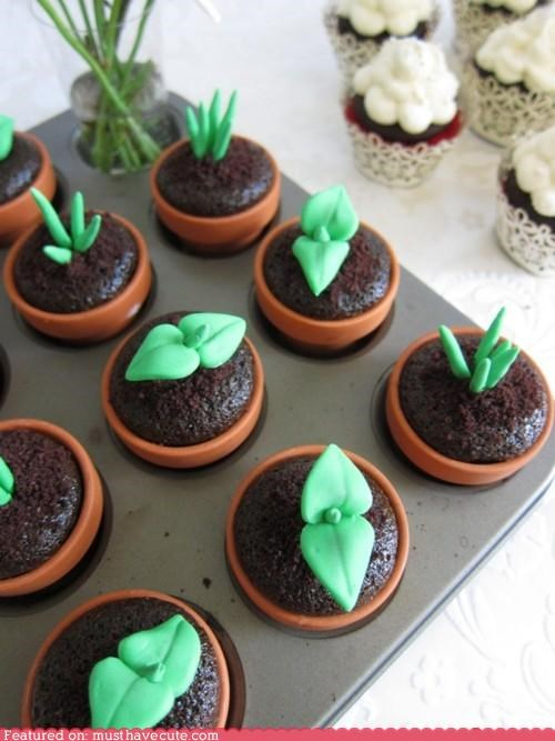 chocolate cupcakes epicute fondant green leaves plants sprouts - 4699988480