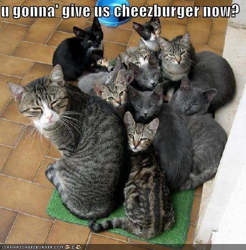 Cheezburger Image 4699996928