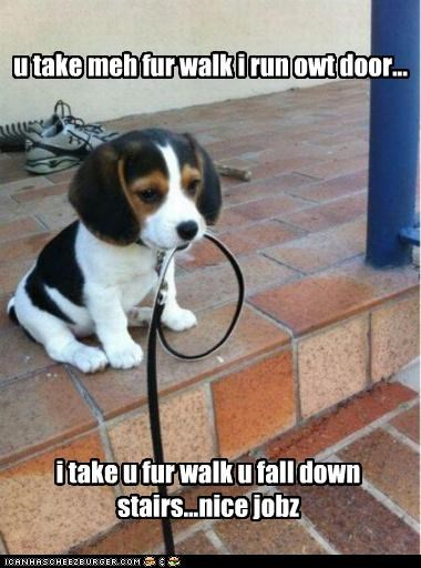 beagle,comparison,contrast,difference,FAIL,human,leash,me,nice job,puppy,sarcasm,you