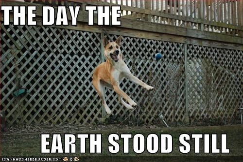 day,earth,film,frozen,jump,literalism,mixed breed,Movie,shiba inu,still,stood,the day the earth stood still,title