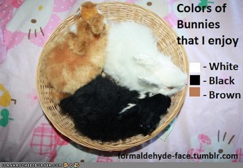 basket bunnehs bunnies charts colors enjoy graphs
