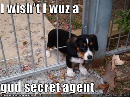 agent,beagle,fence,gate,good,puppy,secret,secret agent,stuck,wish