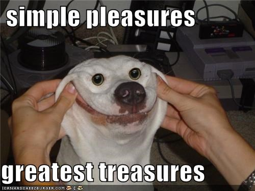 critters cute dogs smile - 4701231104
