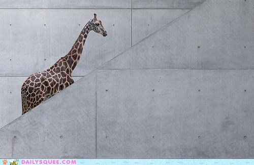 acting like animals afraid broken escalator giraffes long neck pain stairs standing whiplash - 4701375488