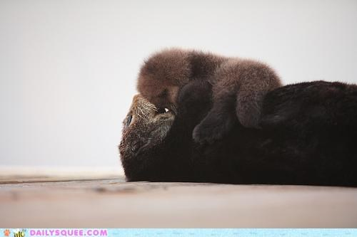 baby,cuddling,cutest ever,explode,fuzzy,lump,mother,oh my squee,otter,otters,pup