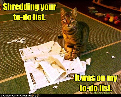 caption,captioned,cat,list,recursion,shredding,to do