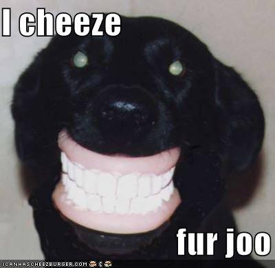 Cheezburger Image 470158592
