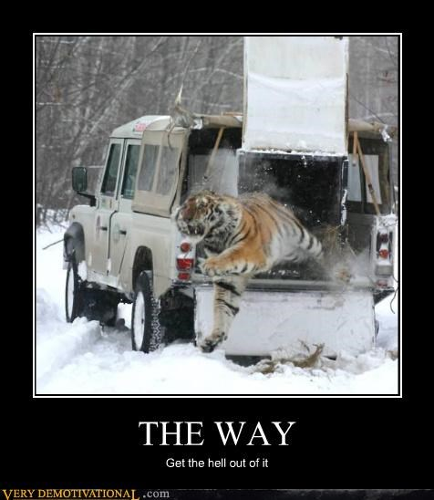 in the way,Terrifying,tiger,truck,wtf
