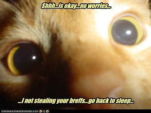 back breath caption captioned cat closeup denial go not Okay reassuring shh sleep stealing - 4702301440