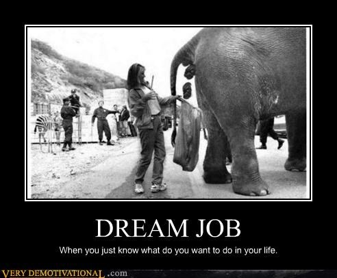 dream job,elephant,poop,Sad