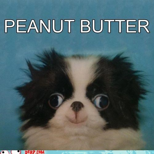 critters,cute,dogs,peanut butter