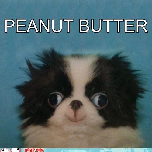 critters cute dogs peanut butter - 4702773248
