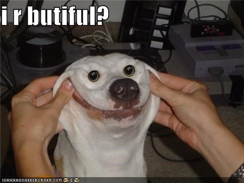 beautiful critters dogs smile - 4703154176