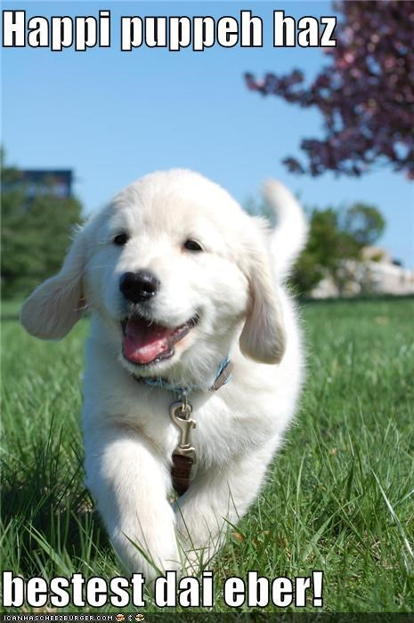 best best ever day excited golden retriever happy outside puppy running - 4703294208