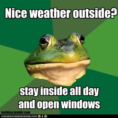 breeze,foul bachelor frog,frog,outside,weather,windows